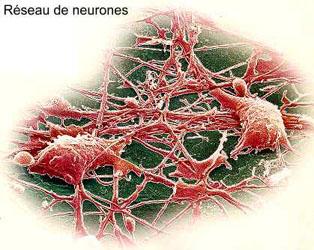 Réseaux neurones